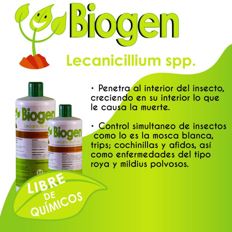 Lecanicillium