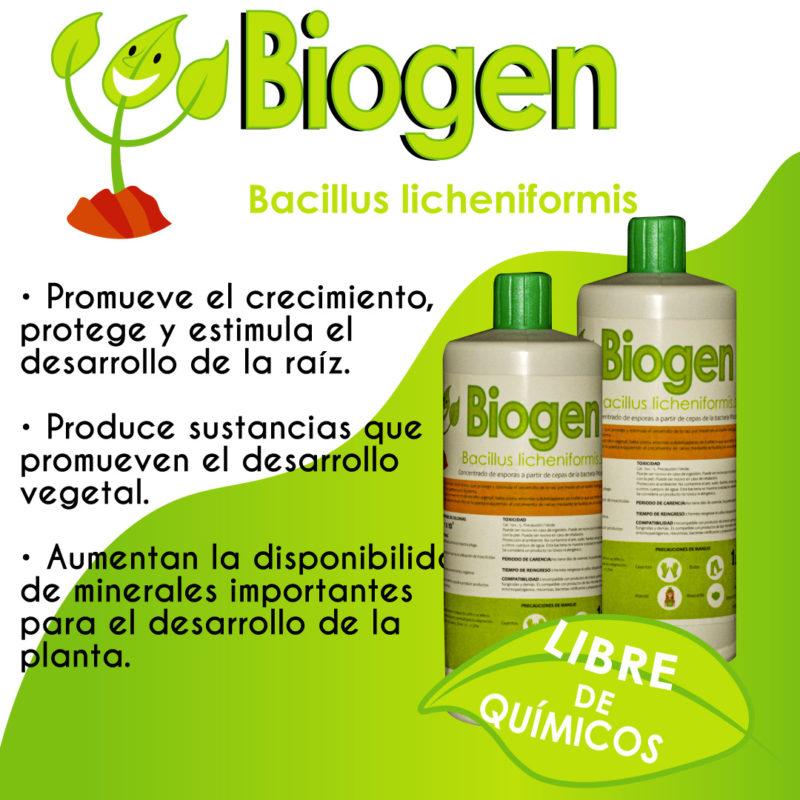 bacillus-l