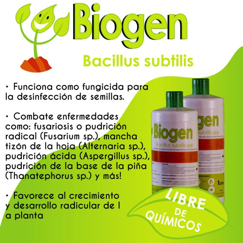 bacillus-subitllus