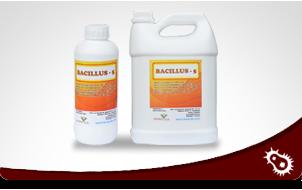 bacilus_-1