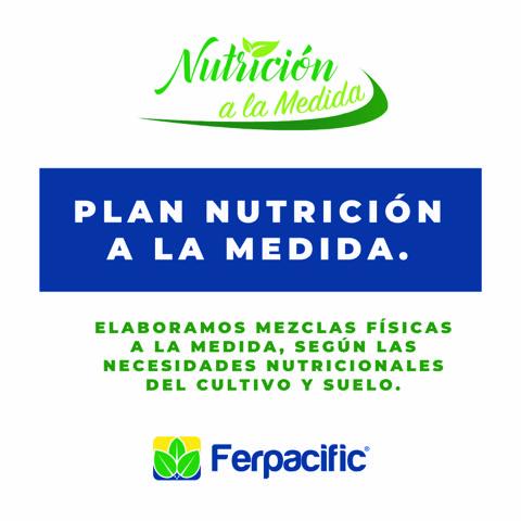 Plan-Nutricion-a-la-medida