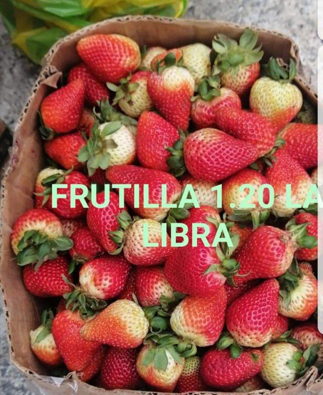 Frutilla-1