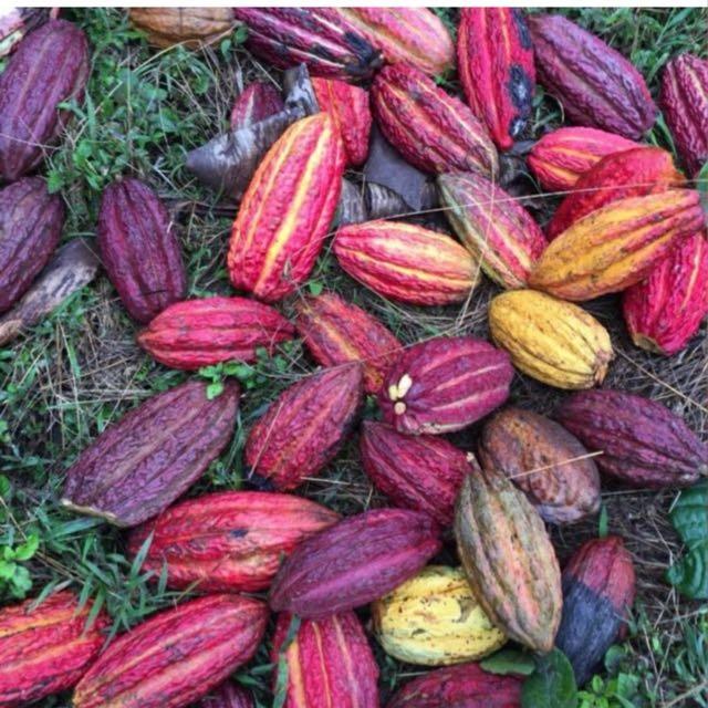 cacaooo
